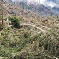 Maltempo nei boschi: Federforeste lancia l'allarme tarli