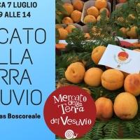 - Boscoreale: Mercato della Terra Vesuvio con la Giornata del 7 Luglio dedicata all'Albicocca. (Scritto da Antonio Castaldo)