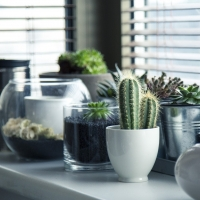 E' tempo di vacanze: come annaffiare le piante?