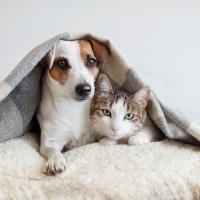 Cani e gatti: 1,7 milioni di italiani hanno assicurato il proprio amico a 4 zampe