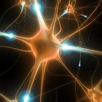 Autismo e cellule staminali del cordone ombelicale