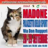 I Gatti Più Belli del Mondo, per la prima volta, al Palazzetto dello Sport di Madone (Bergamo)