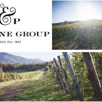 Un'ottima annata per F&P Wine Group: la vendemmia 2019 si preannuncia perfetta