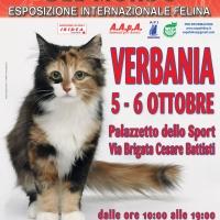 I Gatti Più Belli del Mondo al Pazzetto dello Sport di VERBANIA
