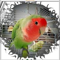 TULLA E LA SUA PRIMA BIRD&HUMAN SKYMARATHON (B&HS)