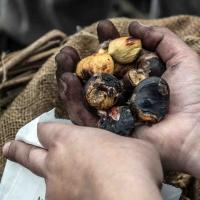 Festa di Castagnatura, a Raggiolo rivivono le tradizioni dell'autunno