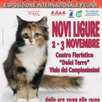 I Gatti Più Belli del Mondo arrivano a Novi Ligure