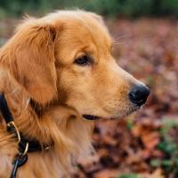 Collari per cani: ecco tutte le tipologie esistenti