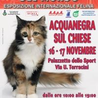 I Gatti Più Belli del Mondo, per la prima volta, al Palazzetto dello Sport di Acquanegra sul Chiese (Mn)