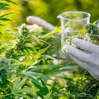 La Marijuana può curare depressione e ansia?