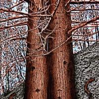 """""""Il respiro della natura"""", opere di Delfo Tinnirello in mostra al Quadrifoglio"""