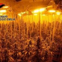 """Scoperta una fabbrica di droga dei """"narcos cinesi"""": l'Emilia come il Colorado?"""