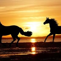 Come poter trovare cavalli in vendita online grazie a www.horseweb.com
