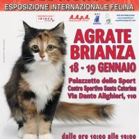 I Gatti Più Belli del Mondo al Centro Sportivo di AGRATE BRIANZA
