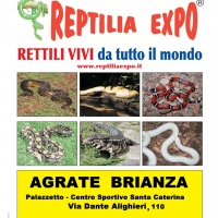 Reptilia Expo - l'affascinante mondo dei rettili
