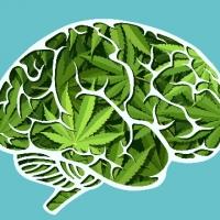 La marijuana è una droga, la marijuana fa male