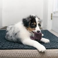 Arriva un cucciolo: ecco la guida suo body language  per accoglierlo al meglio