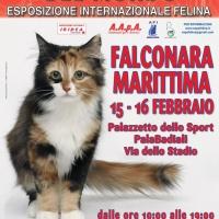 I Gatti Più Belli del Mondo al Palasport PalaBadiali di FALCONARA MARITTIMA