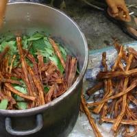 Festini a base di Ayahuasca, la droga allucinogena degli sciamani