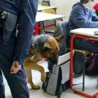 Lo spaccio di droga nelle scuole