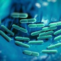 Fermenti lattici e Probiotici: sono la stessa cosa?