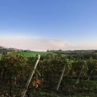 Hic et Nunc presenta  il Barbera del Monferrato Superiore Docg MONumento 2017: una nuova etichetta per un nuovo sguardo sul Monferrato