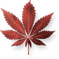 Come l'abuso di marijuana predispone il corpo alle malattie? Prevenzione con la corretta informazione