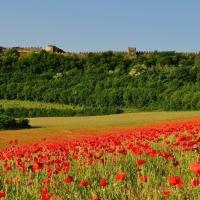 Riapre questo weekend la Rocca di Lonato del Garda, per una rilassante giornata all'aperto, fra natura e storia