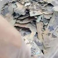 Le banconote: la preda (sconosciuta) delle termiti