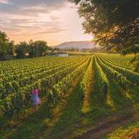 Visit Brescia – Provincia di Brescia, un Territorio di Vino