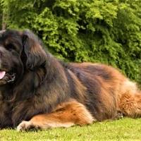 Cani di taglia grande più adatti agli spazi aperti