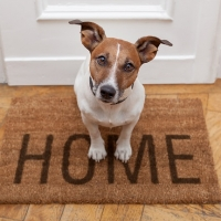 Animali: solo il 15,3% dei proprietari li assicura