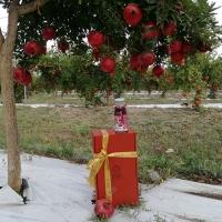 Natale si avvicina.. è il momento di pensare ai regali  di Agrinsalento