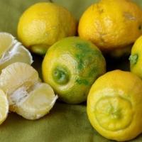 Il bergamotta Rutaceae, una soluzione naturale dove si contrivano le piante?