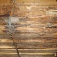 """Il legno e il suo deterioramento: l'azione """"estetica"""" dei funghi cromogeni"""