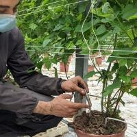 Inoovazione tecnologica in agricoltura: il monitoraggio della serra avviato dalla start up Lualtek