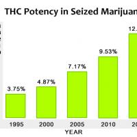 La marijuana di oggi è più potente e i rischi sono più alti