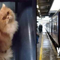 Il gatto Grisù esce dal trasportino sul treno Lecce-Torino, il controllore lo fa scendere a Pescara: è stato ritrovato
