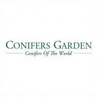 Su Conifersgarden.com, le più belle  conifere da giardino