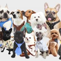 Pupakiotti – Pet's Amore, un brand che traduce lo stile e il comfort della moda e del design Made in Italy per gli amici a quattro zampe Modelli originali, alta qualità, cura artigianale e funzionalità a un prezzo