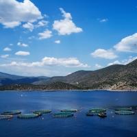 L'Osservatorio europeo del mercato dei prodotti della pesca e dell'acquacoltura (EUMOFA) pone l'Italia tra i Paesi UE con il livello di spesa totale più alto per il consumo di pesce fresco
