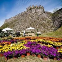 Dal 28 al 30 maggio torna FIORInellaROCCA – Mostra mercato di piante e fiori rari alla Rocca Visconteo Veneta di Lonato del Garda (BS)