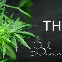 La marijuana di oggi è più forte di quella di una volta
