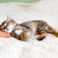 Cane e gatto: vincono i tessuti anti macchia e anti graffio