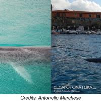 Il passaggio delle balene a Capo Sant'Andrea