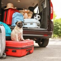 11 milioni di italiani in vacanza col proprio animale domestico