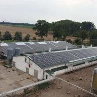 Energia solare dal pollaio: Sun Contracting allaccia alla rete due impianti da 1,3 MWp