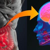 I problemi di salute mentale possono essere curati a partire dall'intestino