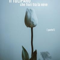 """Ancora consensi per """"Il tulipano che fiorì tra la neve"""" di Susy Vizzo, presto in arrivo con una nuova opera"""