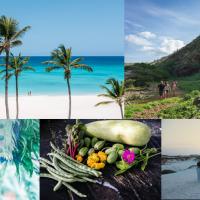 Perché scegliere l'isola di Aruba per tornare a viaggiare a lungo raggio